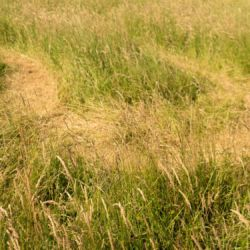 Pathways in the grass - Longrun Meadow Labyrinth